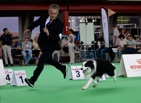 World Dog Show 2018!!!! Amsterdam!!