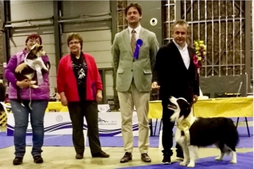 Club show British sheepdogs in Ljubliana 2017