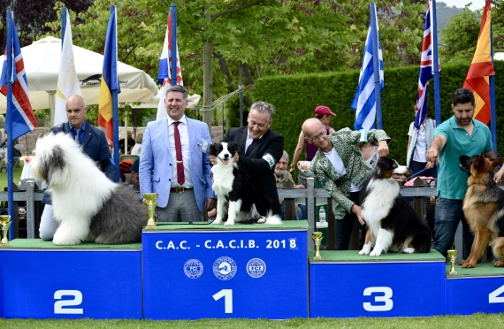 2x CACIB Athens 2018 & Crufts Qualification '19