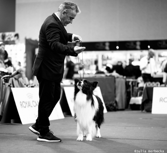 European & Austria Winner Show 2019